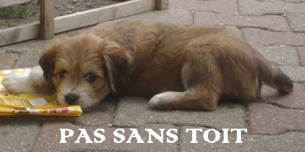 PAS SANS TOIT