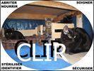Chats de l'île du Ramier
