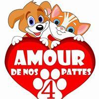 amour4p