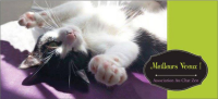 au-chat-zen