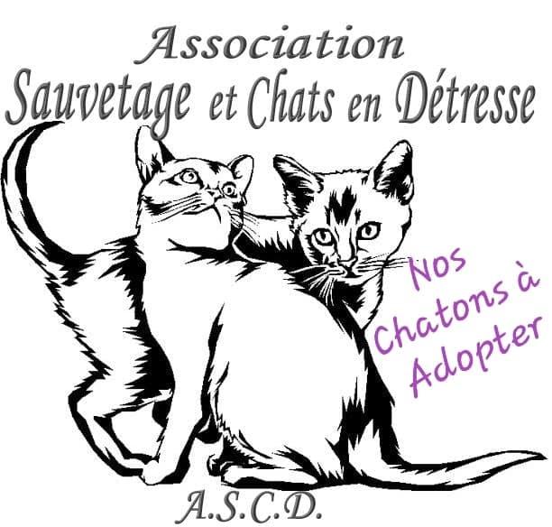 Nos-Chatons-a-adopter-et-logo